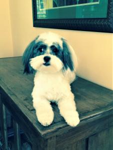 Cute dog Salt Lake City